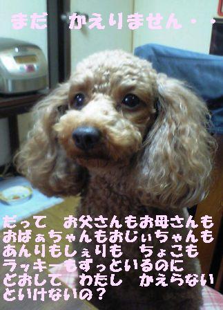 e0119017_18305767.jpg