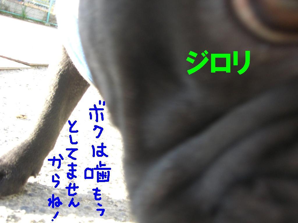 c0113109_11378.jpg