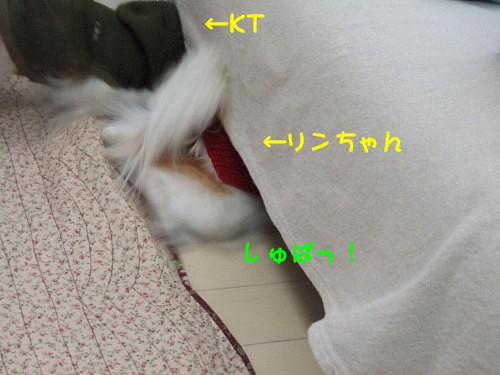 c0044199_1747447.jpg