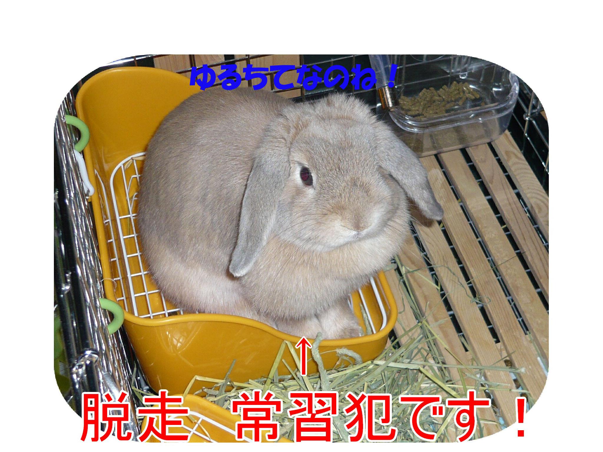 c0151439_17183773.jpg
