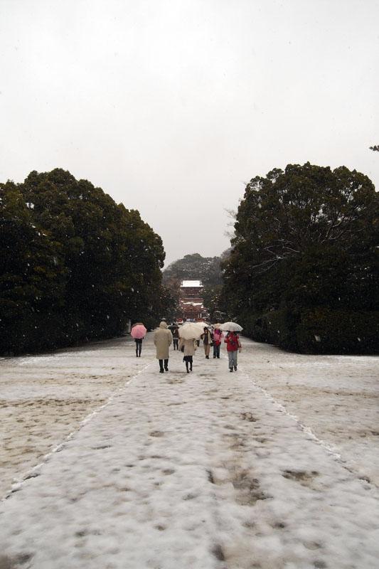 PHOTO:鶴岡八幡宮