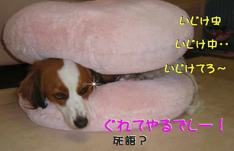 c0075585_1184969.jpg