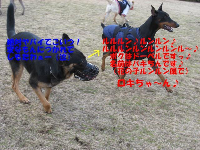 a0088086_0323848.jpg