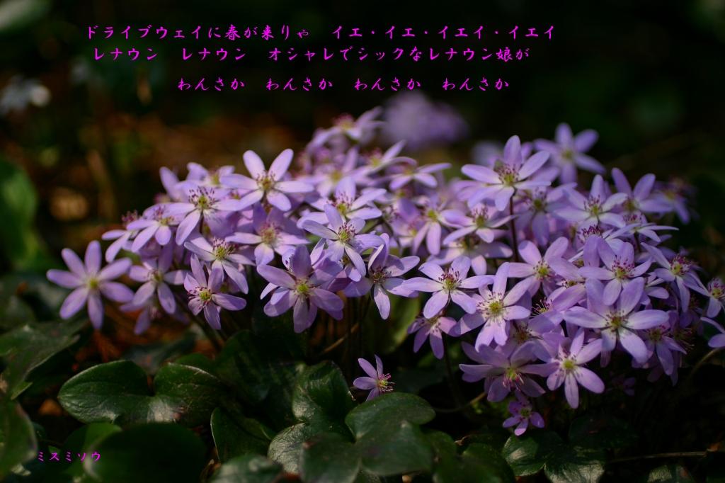 c0008948_19102016.jpg