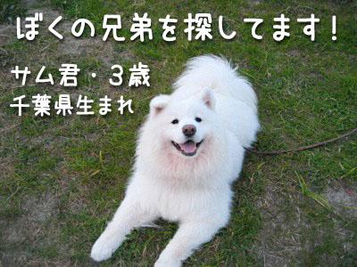 c0062832_17104374.jpg