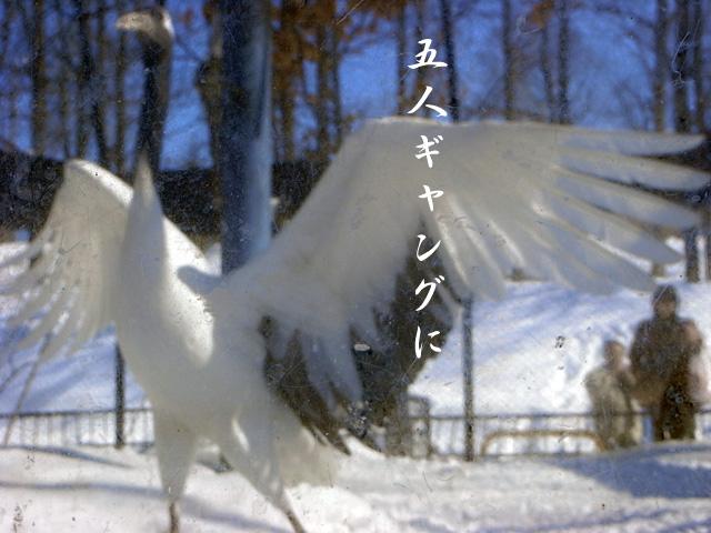 c0036744_1654194.jpg
