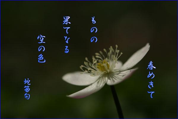 c0065587_14155999.jpg