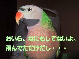 c0133013_10381433.jpg