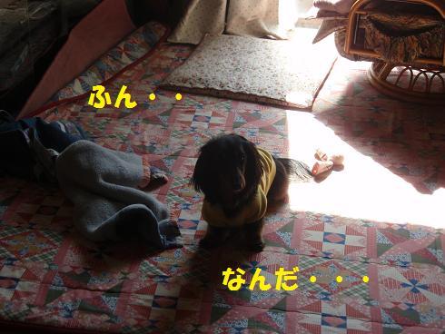 c0151866_18455268.jpg