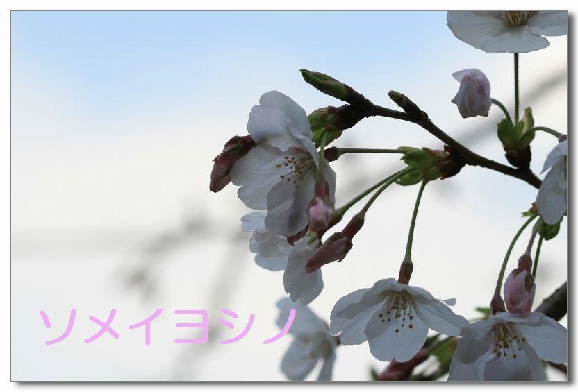 a0057905_2014987.jpg