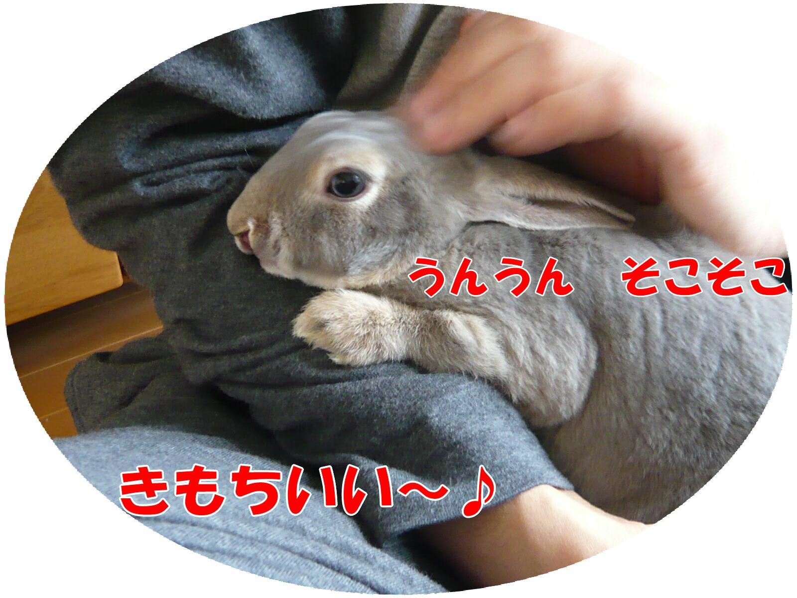 c0151439_18404890.jpg