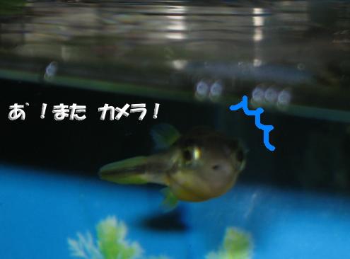 a0014770_20385014.jpg