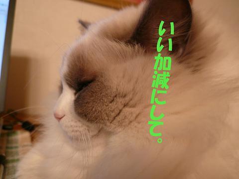c0117597_13334913.jpg