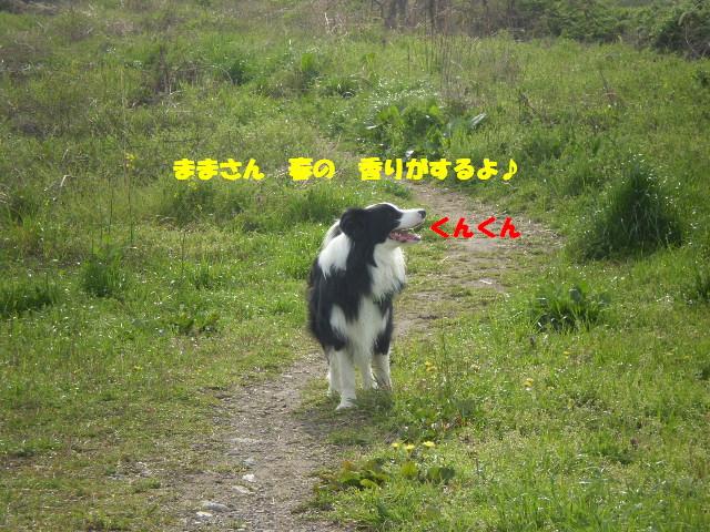 e0117976_1105969.jpg