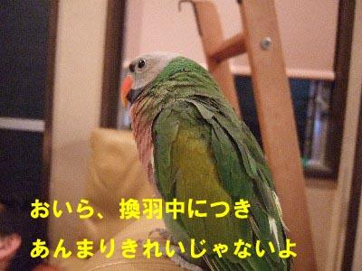 c0133013_15552864.jpg