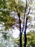 c0093876_1874239.jpg