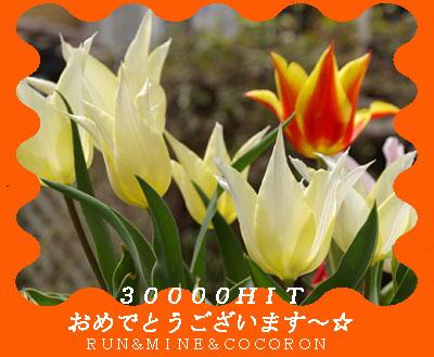 a0053987_232250.jpg