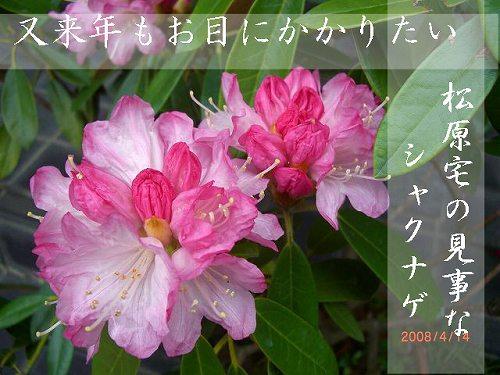 c0129682_2244785.jpg