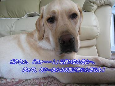 c0028792_227746.jpg