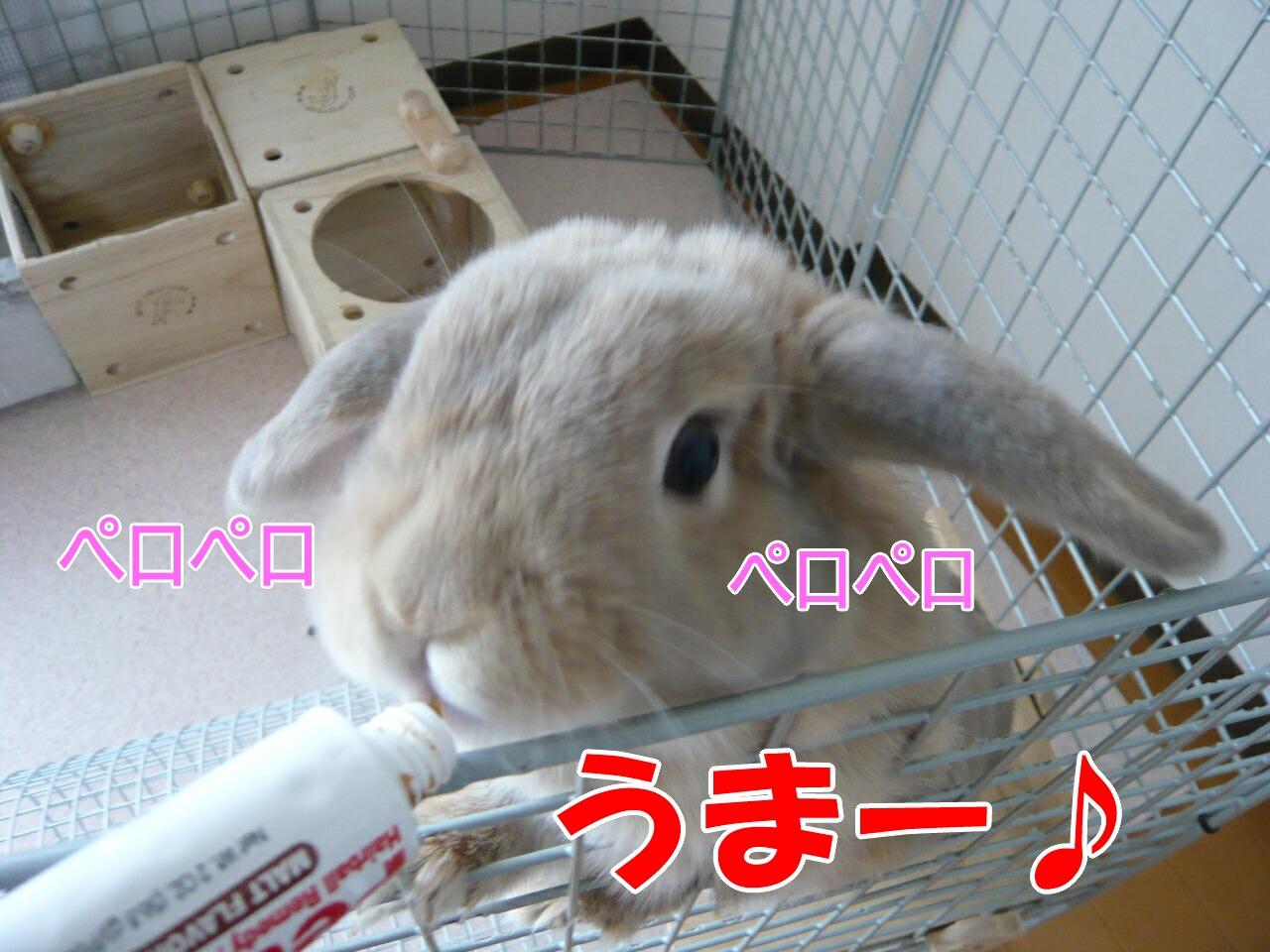 c0151439_131193.jpg