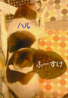 c0156076_18365357.jpg