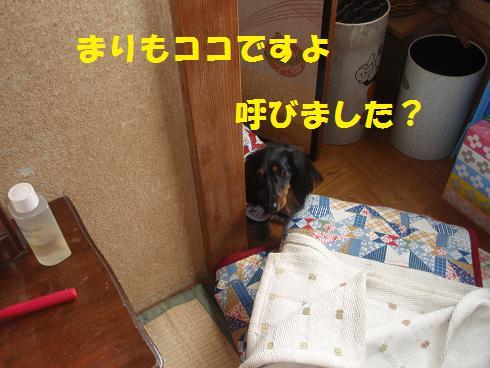 c0151866_18461341.jpg