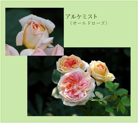 c0051105_1422152.jpg