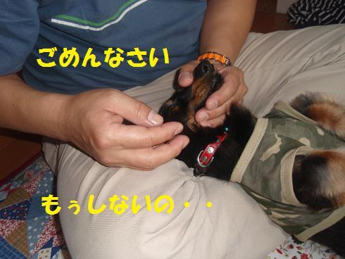 c0151866_21371293.jpg