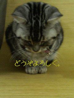 c0143073_21824100.jpg