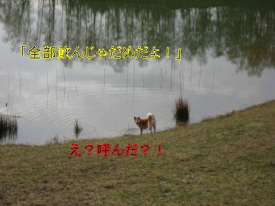 e0079166_4201876.jpg