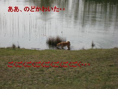 e0079166_4221348.jpg