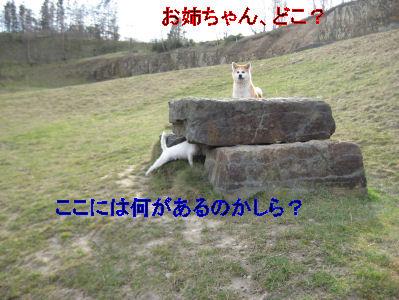 e0079166_422524.jpg