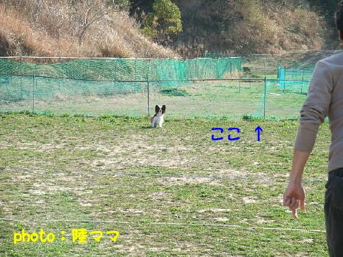 c0044199_1039078.jpg