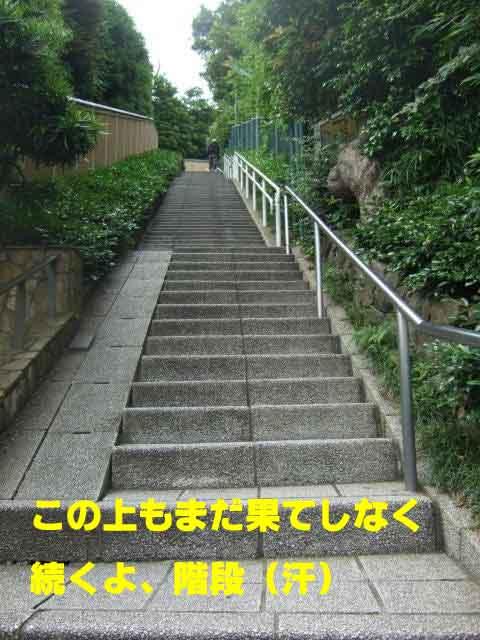 c0133013_1343113.jpg