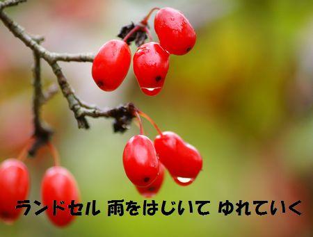 a0043405_8443150.jpg