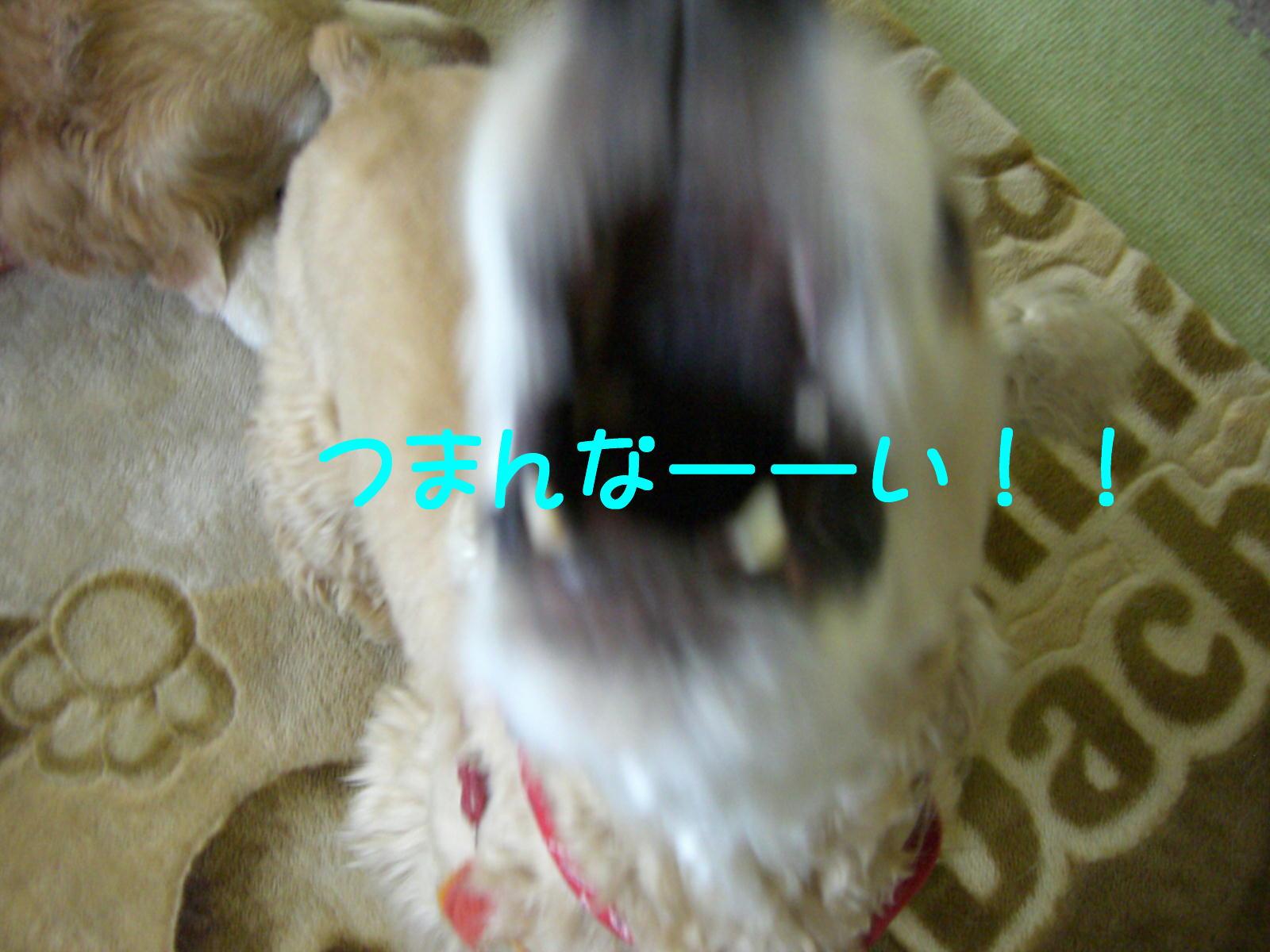 e0059197_13251663.jpg