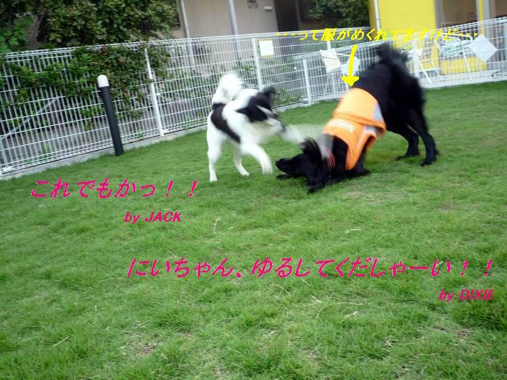 a0104464_12135181.jpg