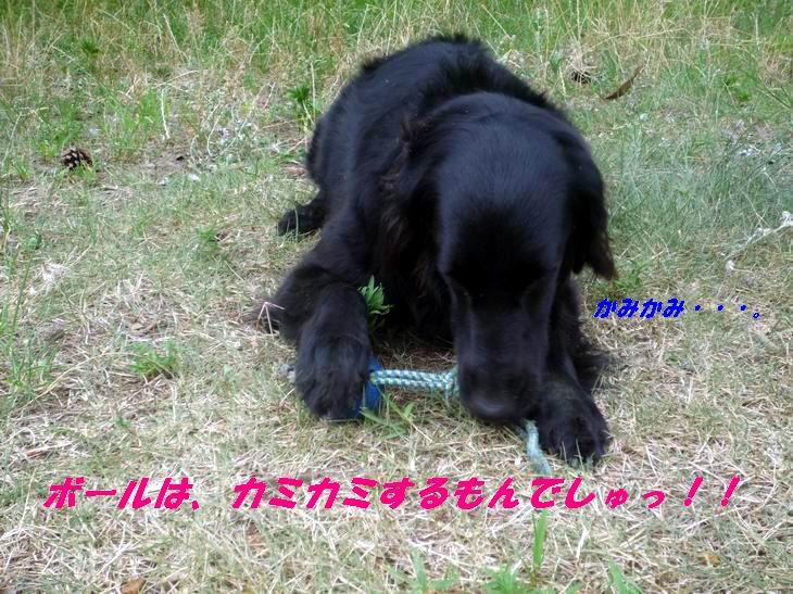 a0104464_14532225.jpg