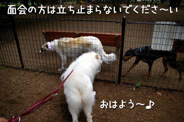 c0062832_19122044.jpg