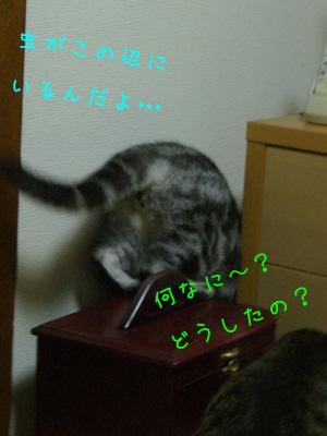 c0024830_22481055.jpg
