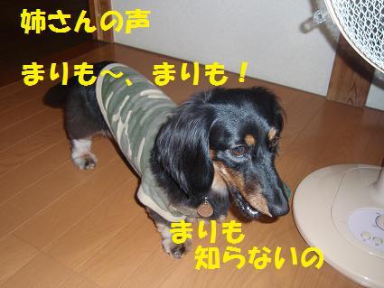c0151866_2184624.jpg