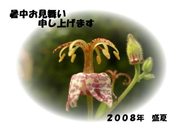 c0042869_8495512.jpg
