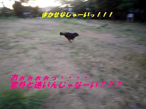 a0104464_11535259.jpg