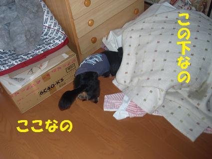c0151866_2184968.jpg