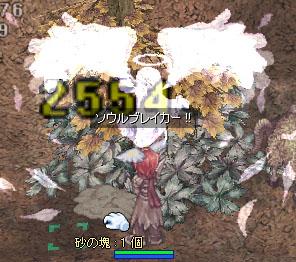 a0019167_1656632.jpg
