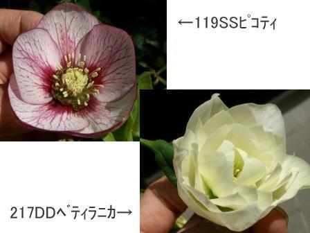 c0025140_10425026.jpg
