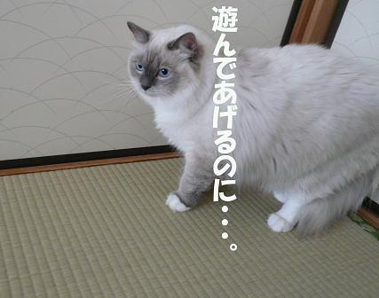 c0117597_216186.jpg