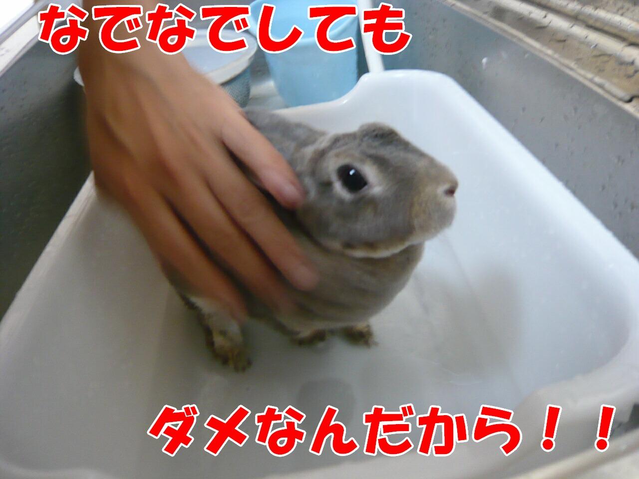 c0151439_7581111.jpg