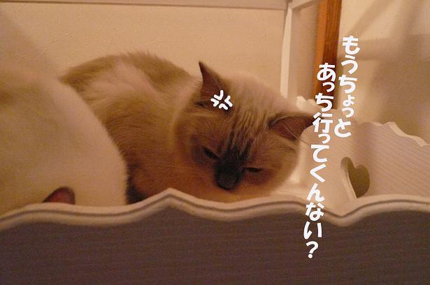 c0117597_14155.jpg