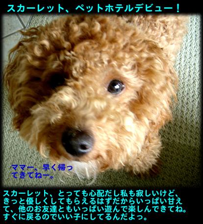 c0164491_1540937.jpg